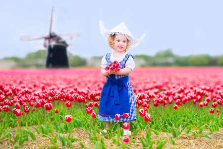 dutch girl: Sweet curly toddler girl wearing Dutch traditional national costume dress and hat playing in a field of blooming tulips next to a windmill in Amsterdam region, Holland, Netherlands