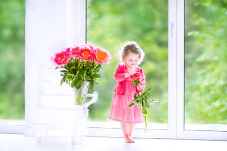 first home: Cute happy toddler girl with curly hair wearing a pink dress playing with a bunch of beautiful big peony flowers in a vase in a white living room with big garden view windows Stock Photo