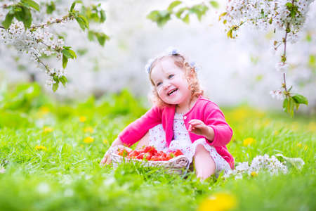 Adorable happy toddler girl with curly hair and flower crown wearing a red dress enjoying picnic in a beautiful blooming fruit garden with white blossoms on apple trees eating strawberry for healthy snack  photo