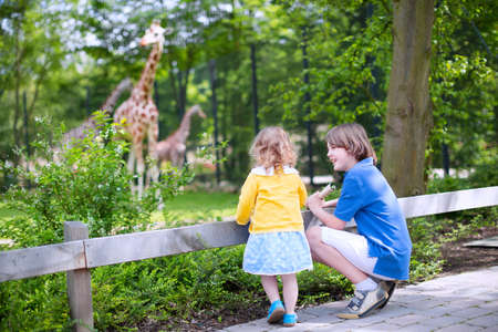 zoologico: Ni�o riendo feliz y su hermana ni�o ni�a linda con el pelo rizado con un vestido que se divierten juntos en un parque zool�gico de ver jirafas y otros animales en un d�a de viaje durante las vacaciones de verano