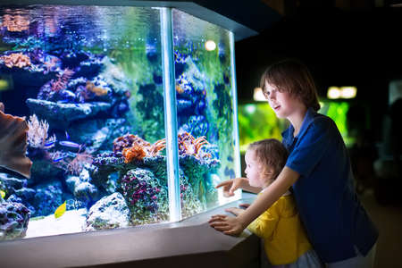 fish: Happy laughing boy and his adorable toddler sister, cute little curly girl watching fishes in a tropical aquarium with coral reef wild life having fun together on a day trip to a modern city zoo Stock Photo