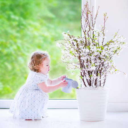 Cute little girl, funny toddler with curly hair wearing a blue festive dress, watering flowers - cherry blossom tree at home in a white sunny living room with a big garden view window photo