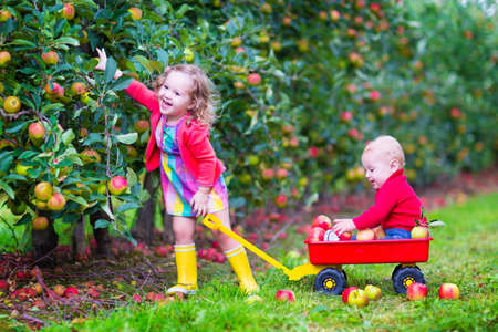 barrow: Happy little children, cute toddler girl and adorable funny baby boy, brother and sister, playing together in a beautiful fruit garden eating apples having fun on a wheel barrow ride enjoying a warm autumn day outdoors