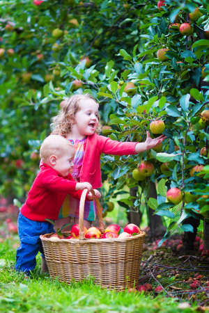 Happy little children, cute toddler girl and adorable funny baby boy, playing together in a beautiful fruit garden eating apples having fun on a wheel barrow ride enjoying a warm autumn day outdoors Stockfoto