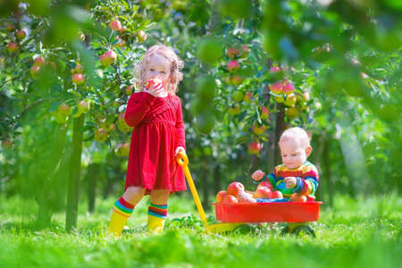 Happy little children, cute toddler girl and adorable funny baby boy, playing together in a beautiful fruit garden eating apples having fun on a wheel barrow ride enjoying a warm autumn day outdoors photo