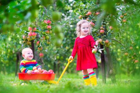 ni�os ayudando: Los ni�os peque�os felices, ni�a ni�o lindo y adorable beb� divertido, jugando juntos en un hermoso jard�n de frutas comer manzanas que se divierten en un paseo en carretilla disfrutando de un c�lido d�a de oto�o al aire libre Foto de archivo