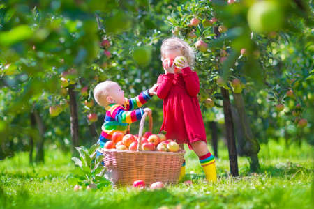 Happy little children, toddler girl and funny baby boy, brother and sister, playing together in a beautiful fruit garden eating apples next to a big basket on a warm autumn day outdoors photo