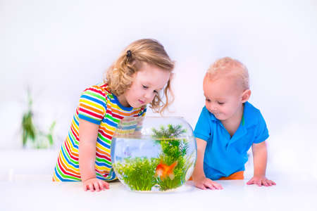 Two children, brother and sister, cute little girl and adorable baby boy feeding a goldfish swimming in a round fish bowl aquarium having fun with their pet at home photo