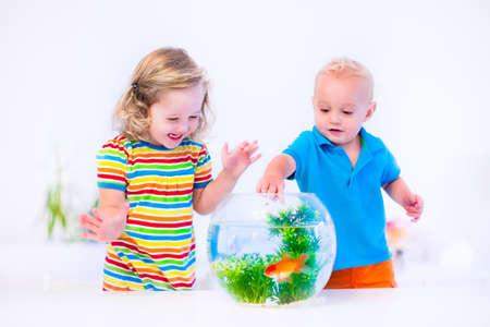 peces de colores: Dos niños, hermano y hermana, la niña linda y adorable bebé la alimentación de un pez de colores nadando en un acuario pecera redonda que se divierte con su mascota en casa Foto de archivo