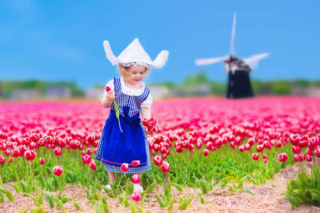 dutch typical: Adorable curly toddler girl wearing Dutch traditional national costume dress and hat playing in a field of blooming tulips next to a windmill in Amsterdam region, Holland, Netherlands Stock Photo