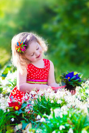 Cute curly little girl in a red summer dress working in the garden watering first spring flowers on a sunny warm day Stock Photo