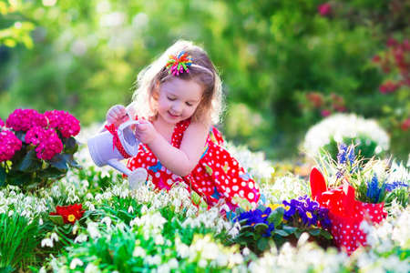 work environment: Cute curly little girl in a red summer dress working in the garden watering first spring flowers on a sunny warm day Stock Photo