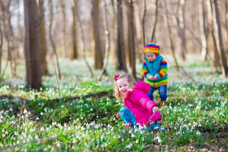 early childhood: two little children, cute toddler girl and funny baby boy, brother and sister, playing in a sunny forest with beautiful spring snowdrop flowers