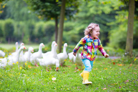 Funny happy little girl, adorable curly toddler wearing a colorful rain jacket, running in a park playing and feeding white geese birds on a warm autumn day in a city forest