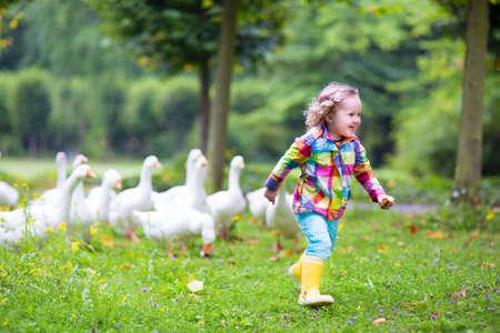 animales de granja: Niña divertida feliz, niño rizado adorable que lleva una chaqueta colorida lluvia, corriendo en un parque de juego y alimentar aves gansos blancos en un cálido día de otoño en un bosque de la ciudad Foto de archivo
