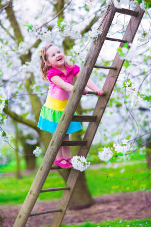 Little girl climbing a ladder in a fruit garden. Child playing in blooming cherry and apple tree orchard. Kids vacation on a farm. Countryside outdoor fun for family with children. Preschooler kid exploring wild nature. photo