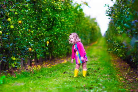 apple basket: Child picking apples on a farm. Little girl playing in an apple tree orchard. Kids pick ripe fruit in autumn. Fall harvest time. Country outdoor fun for family with children. Toddler kid eating fruits.