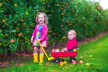 bebes niñas: Niño recogiendo manzanas en una granja. Niña y muchacho juegan en el huerto manzano. Niños recogen frutos en otoño con una carretilla. Niño y el bebé come frutas en la cosecha de otoño. Diversión al aire libre para los niños.