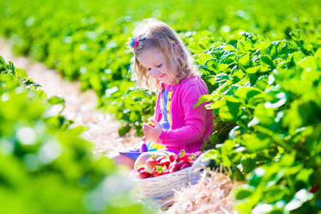 strawberry baskets: Child picking strawberries. Kids pick fresh fruit on organic strawberry farm. Children gardening and harvesting. Toddler kid eating ripe healthy berry. Outdoor family summer fun in the country.