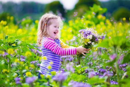 Child picking wild flowers in field. Kids play in a meadow and pick flower bouquet for mother on summer day. Children playing on a farm. Toddler girl outdoors in spring. Family vacation in the country Stock Photo