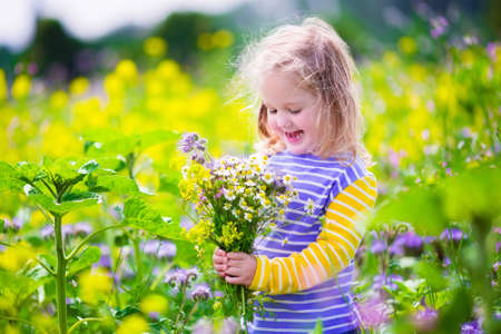 Child picking wild flowers in field. Kids play in a meadow and pick flower bouquet for mother on summer day. Children playing on a farm. Toddler girl outdoors in spring. Family vacation in the country Banque d'images