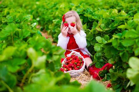 子供はいちご狩り。子供たちは、有機イチゴの農場の新鮮な果物を選択します。庭いじりをし、収穫の子供。幼児の子供が健全な熟したベリーを食