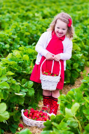 childrens food: Child picking strawberries. Kids pick fresh fruit on organic strawberry farm. Children gardening and harvesting. Toddler kid eating ripe healthy berry. Outdoor family summer fun in the country.
