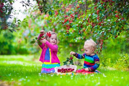 arboles frutales: Ni�os recogiendo cerezas en una granja de frutas. Los ni�os recogen cerezas en la huerta de verano. Ni�o ni�o y el beb� coma fruta fresca de �rbol del jard�n. Los ni�os y ni�as de comer bayas en una cesta. Tiempo de cosecha diversi�n para la familia