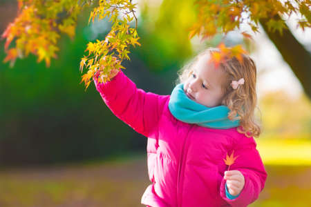 toddler: Little girl with yellow leaf. Child playing with autumn golden leaves. Kids play outdoors in the park. Children hiking in fall forest. Toddler kid under a maple tree on a sunny October day. Stock Photo