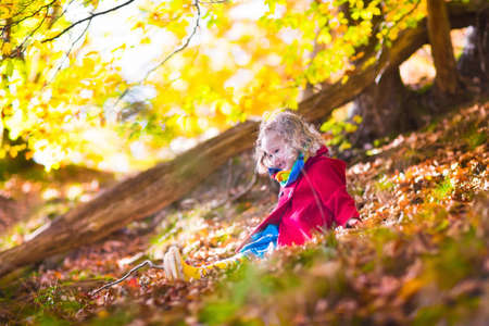 autumn young: Little girl with yellow leaf. Child playing with autumn golden leaves. Kids play outdoors in the park. Children hiking in fall forest. Toddler kid under a maple tree on a sunny October day. Stock Photo