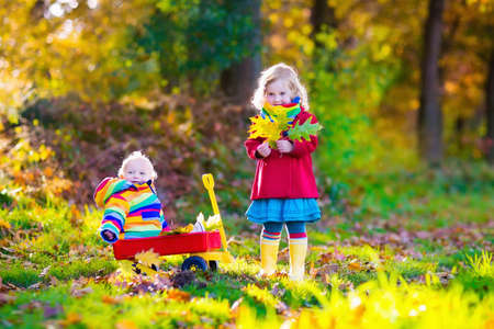 two wheel: Brother and sister play in autumn park with golden leaves. Baby boy in a wheel barrow. Two kids, boy and girl walk in the forest on a sunny fall day. Children playing outdoors with yellow maple leaf.