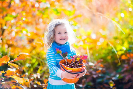 fall leaf: Girl holding acorn and colorful leaf in autumn park. Child picking acorns in a bucket in fall forest with golden oak and maple leaves. Children play outdoors. Kids playing and hiking in the woods.