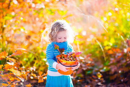 acorn seed: Girl holding acorn and colorful leaf in autumn park. Child picking acorns in a bucket in fall forest with golden oak and maple leaves. Children play outdoors. Kids playing and hiking in the woods.