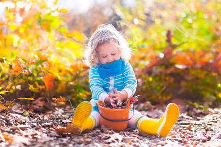 Girl holding acorn and colorful leaf in autumn park. Child picking acorns in a bucket in fall forest with golden oak and maple leaves. Children play outdoors. Kids playing and hiking in the woods.