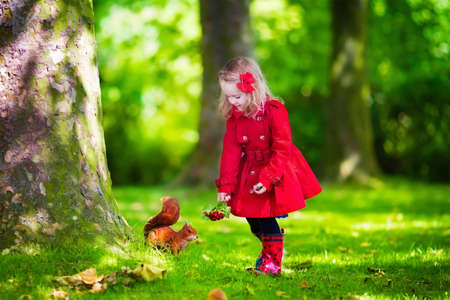 Girl feeding squirrel in autumn park. Little girl in red trench coat and rain boots watching wild animal in fall forest with golden oak and maple leaves. Children play outdoors. Kids playing with pets Фото со стока
