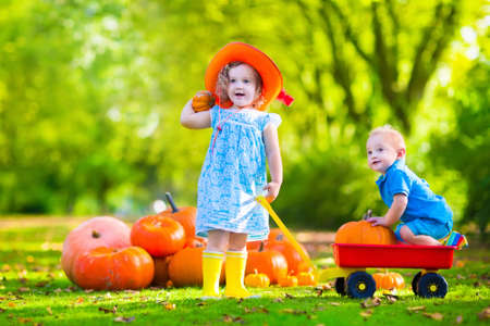 family and friends: Kids playing at pumpkin patch at Halloween. Children play and pick pumpkins on a farm. Toddler girl and baby boy in a wheel barrow harvest vegetables in autumn. Fall outdoor fun for family with child