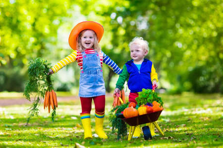 nutrition health: Two children picking fresh vegetables on organic bio farm. Kids gardening and farming. Autumn harvest fun for family. Toddler kid and preschooler play outdoors. Healthy nutrition for child and baby.