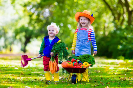 organic plants: Two children picking fresh vegetables on organic bio farm. Kids gardening and farming. Autumn harvest fun for family. Toddler kid and preschooler play outdoors. Healthy nutrition for child and baby.