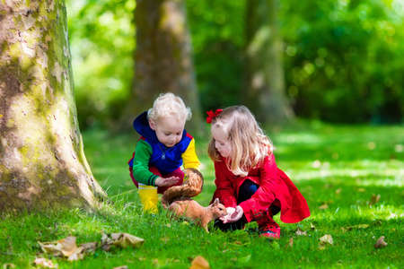 forest animals: Kids feeding squirrel in autumn park. Little boy and girl in red coat and rain boots watch wild animals in fall forest with golden oak and maple leaves. Children play outdoors. Kids playing with pets