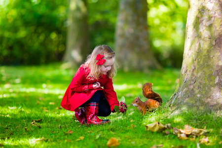 acorn squirrel: Girl feeding squirrel in autumn park. Little girl in red trench coat and rain boots watching wild animal in fall forest with golden oak and maple leaves. Children play outdoors. Kids playing with pets Stock Photo