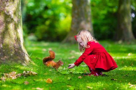 Girl feeding squirrel in autumn park. Little girl in red trench coat and rain boots watching wild animal in fall forest with golden oak and maple leaves. Children play outdoors. Kids playing with pets Imagens