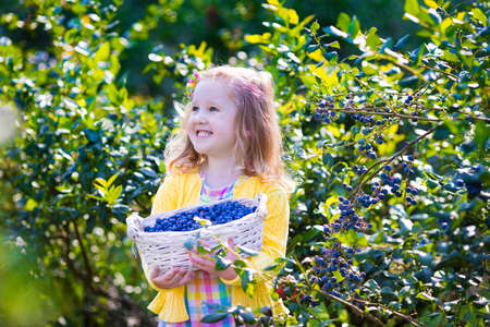 fruit basket: Kids picking fresh berries on blueberry field. Children pick blue berry on organic farm. Little girl playing outdoors in fruit orchard. Toddler farming. Preschooler gardening. Summer family fun. Stock Photo