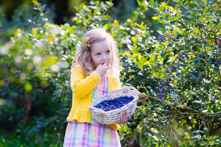 family gardening: Kids picking fresh berries on blueberry field. Children pick blue berry on organic farm. Little girl playing outdoors in fruit orchard. Toddler farming. Preschooler gardening. Summer family fun. Stock Photo