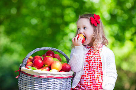 Kind appels plukken op een boerderij in de herfst. Meisje speelt in appelboom boomgaard. Kinderen plukken fruit in een mand. Peuter eten van groenten ten val oogst. Outdoor plezier voor kinderen. Gezonde voeding.