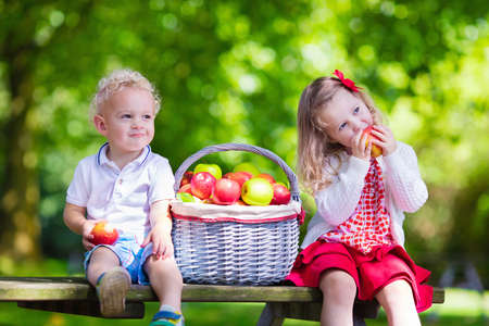 Child picking apples on a farm in autumn. Little girl and boy playing in apple tree orchard. Kids pick fruit in a basket. Toddler eating fruits at harvest. Outdoor fun for children. Healthy nutrition. Stockfoto