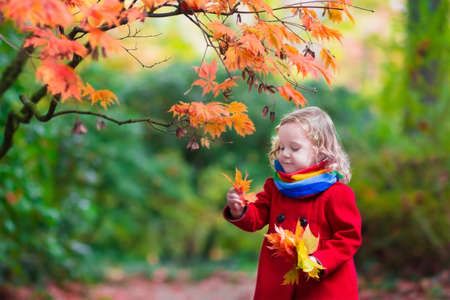 fall fun: Little girl with yellow leaf. Child playing with autumn golden leaves. Kids play outdoors in the park. Children hiking in fall forest. Toddler kid under a maple tree on a sunny October day. Stock Photo