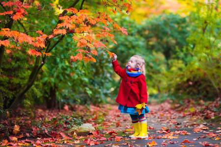 Little girl with yellow leaf. Child playing with autumn golden leaves. Kids play outdoors in the park. Children hiking in fall forest. Toddler kid under a maple tree on a sunny October day. Banque d'images