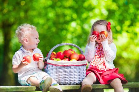 Kind appels plukken op een boerderij in de herfst. Meisje en jongen spelen in appelboom boomgaard. Kinderen plukken fruit in een mand. Peuter eten van fruit bij de oogst. Outdoor plezier voor kinderen. Gezonde voeding.