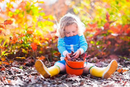 acorn: Girl holding acorn and colorful leaf in autumn park. Child picking acorns in a bucket in fall forest with golden oak and maple leaves. Children play outdoors. Kids playing and hiking in the woods.