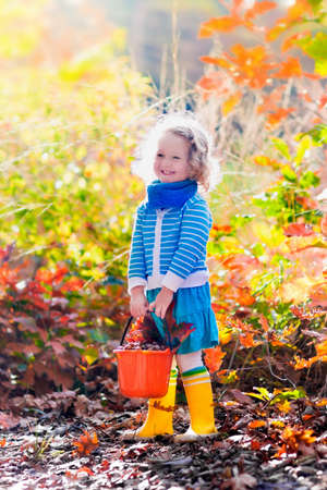 acorn tree: Girl holding acorn and colorful leaf in autumn park. Child picking acorns in a bucket in fall forest with golden oak and maple leaves. Children play outdoors. Kids playing and hiking in the woods.